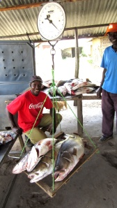 Day catch of Nile Perch. These four fish weighed 38.5 kg.