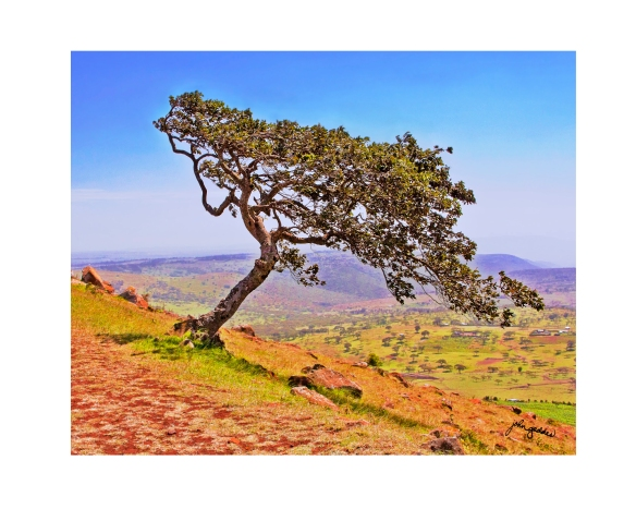 Baridi tree 2 HDR_f5