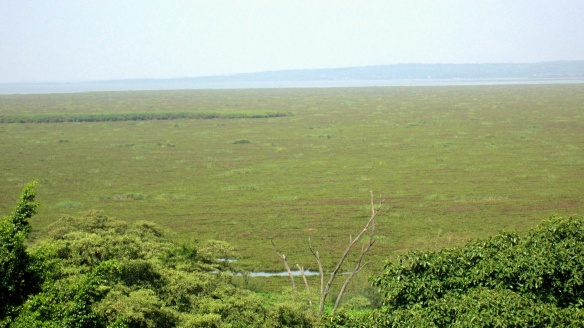 "This was the ""lake view"" from my Kisumu Kenya hotel room.  Kisumu Bay is completely clogged with water hyacinth."