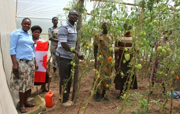 Executive members of the NIWG show off the tomatoes that are growing in their greenhouse, thanks to the availability of water from the CanAssist water tank.  This is both providing nourishment and income for the group and they report feeling somewhat liberated by this project.