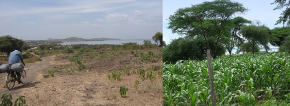 The Oasis of Hope garden in February 2012 and April 2013. Seeds that flourished.