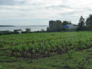 The thriving school farm - CAART funded