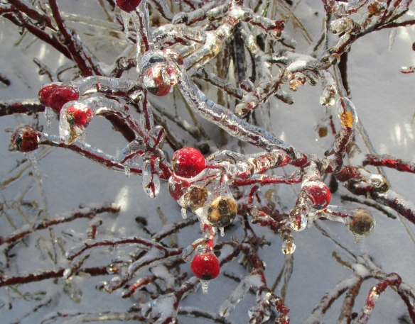 Ice and berries2