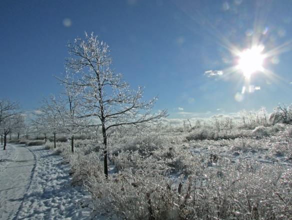 Ice and Sun F