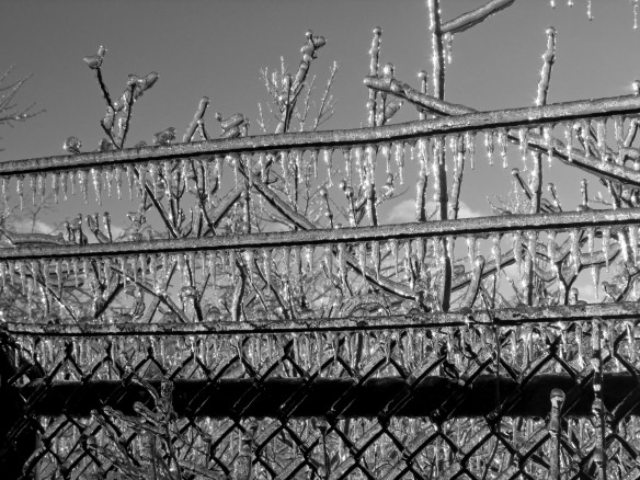 Ice on fence BW F