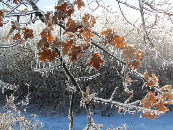 Leaves and ice F