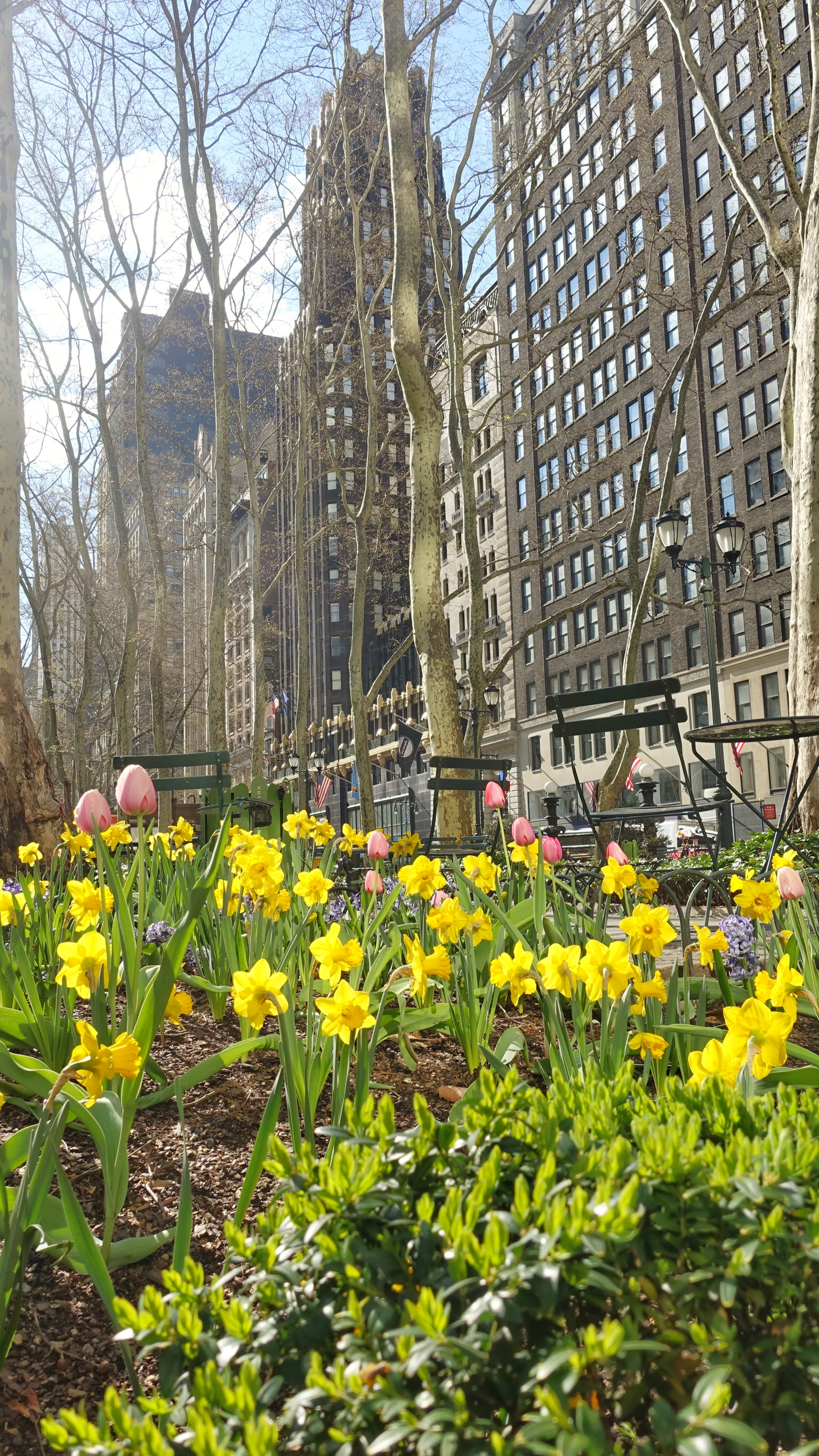 Spring In New York City A Trilogy 1 Spring Flowers Johnageddes